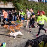 Participantes en un tramo del Canicross